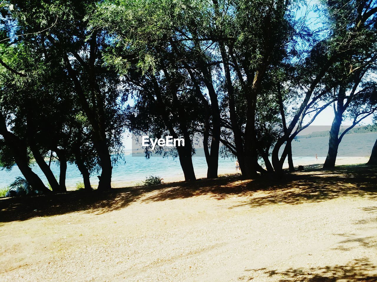 tree, nature, scenics, tranquil scene, sunlight, landscape, tranquility, growth, beauty in nature, outdoors, beach, day, sand, sea, shadow, no people, water, sky