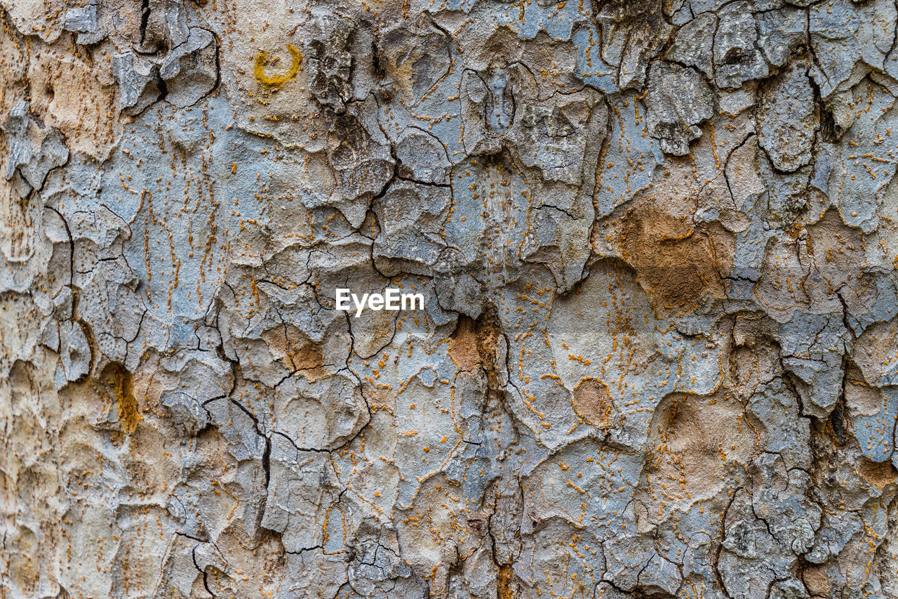 backgrounds, full frame, textured, rough, no people, close-up, day, wall - building feature, old, weathered, built structure, pattern, architecture, tree trunk, outdoors, plant bark, trunk, peeling off, cracked, wall, stone wall, textured effect, ruined