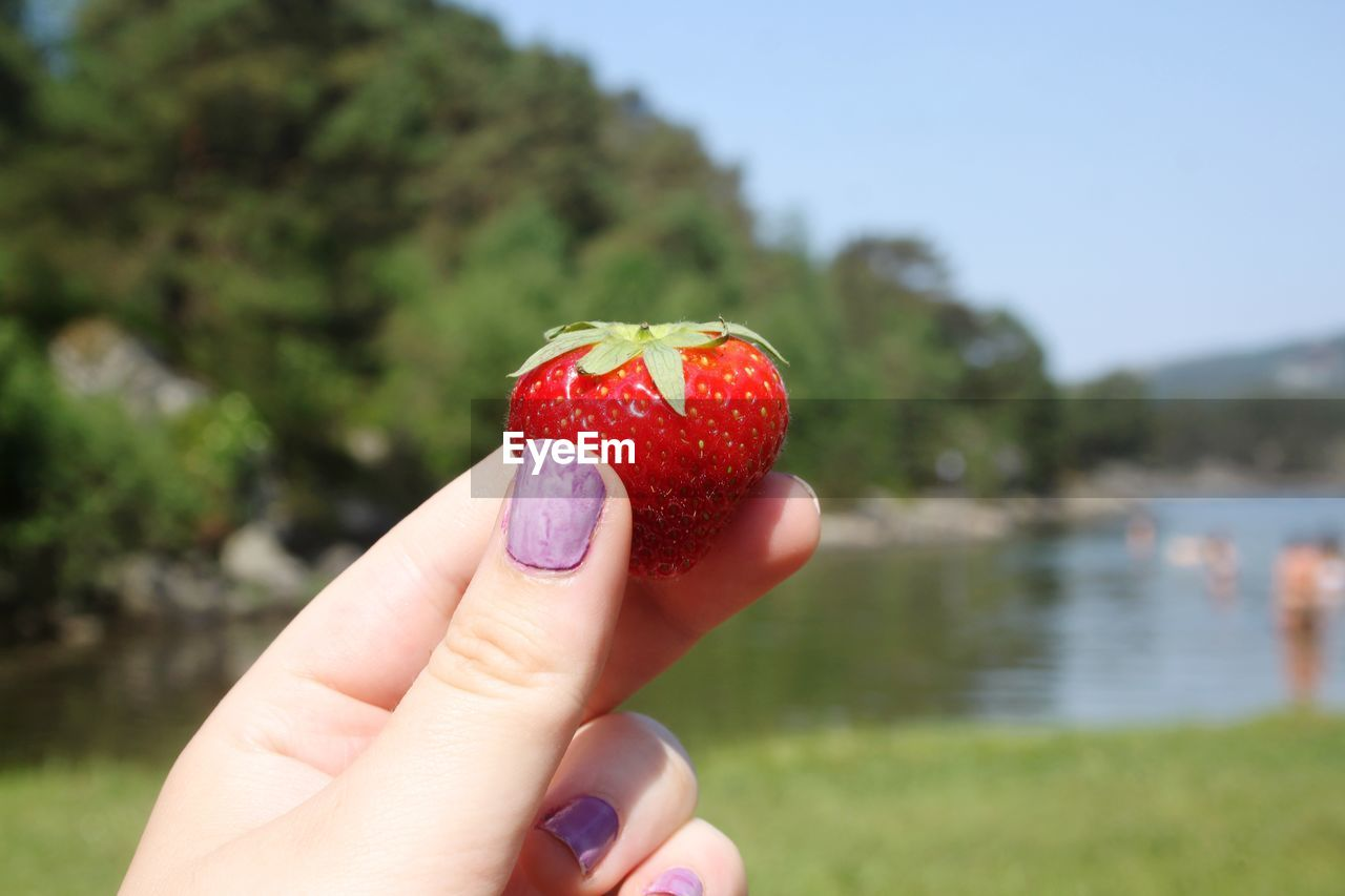 human hand, fruit, hand, human body part, red, focus on foreground, one person, holding, finger, human finger, healthy eating, berry fruit, real people, body part, strawberry, day, wellbeing, food and drink, close-up, food, outdoors, nail, human limb