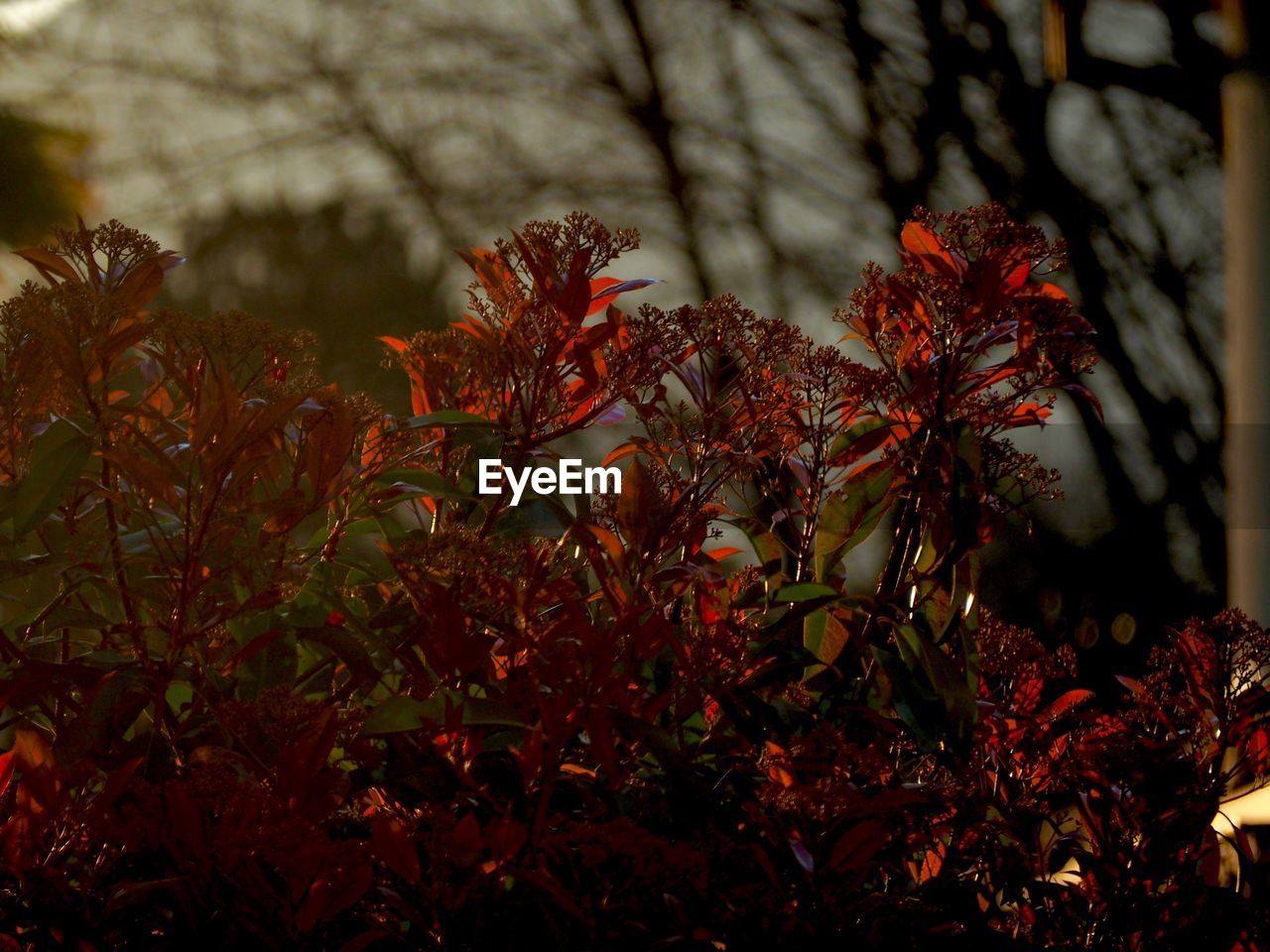 nature, growth, beauty in nature, tranquility, no people, tree, plant, outdoors, autumn, leaf, day, close-up, branch, fragility, freshness