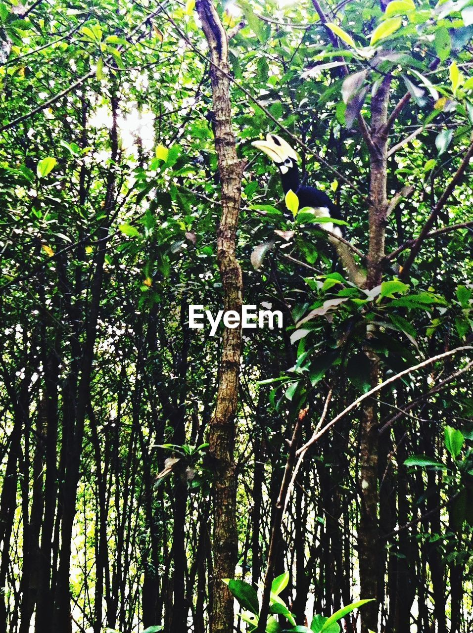 tree, branch, growth, nature, low angle view, beauty in nature, green color, no people, tree trunk, day, outdoors, leaf, forest, scenics, flower, fragility, freshness, animal themes, close-up