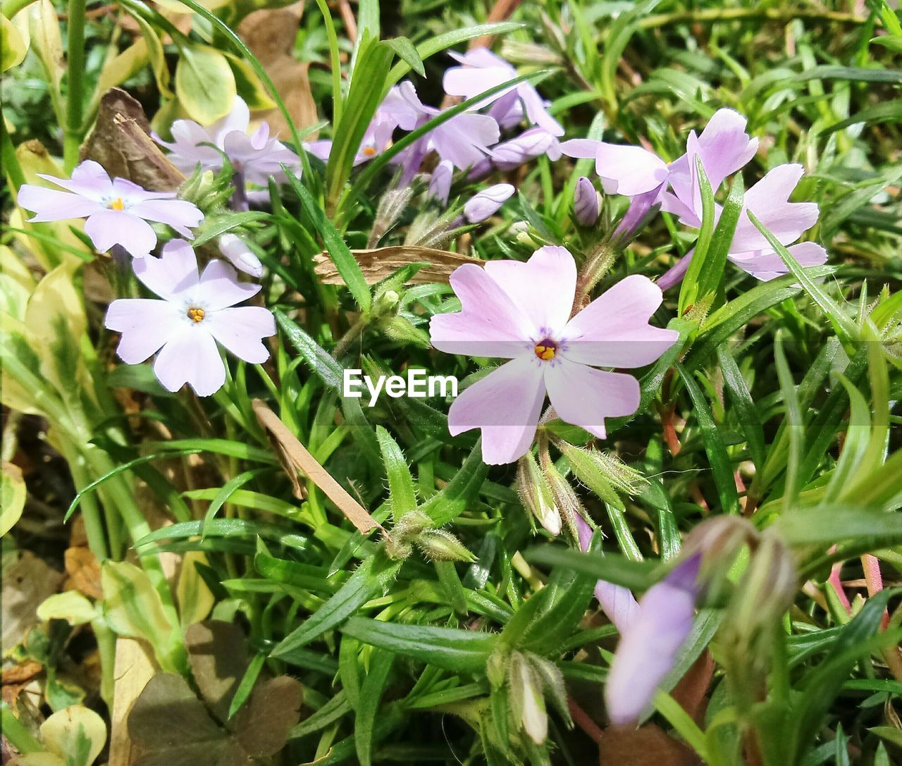 flower, growth, nature, fragility, petal, freshness, beauty in nature, plant, blooming, day, flower head, outdoors, no people, leaf, close-up, periwinkle