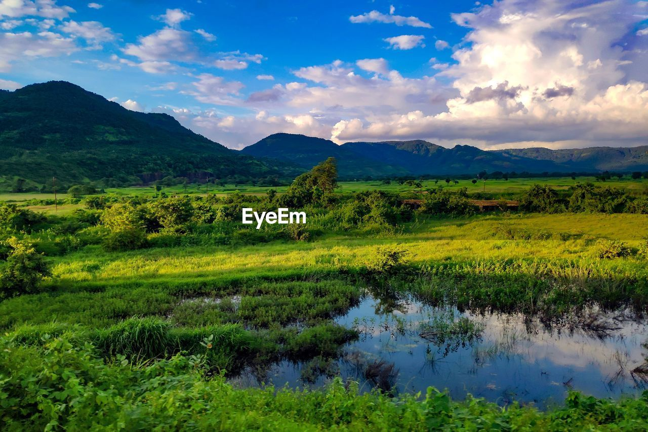 scenics - nature, water, mountain, tranquility, tranquil scene, plant, beauty in nature, sky, cloud - sky, environment, nature, landscape, green color, lake, grass, no people, growth, reflection, tree, outdoors, swamp
