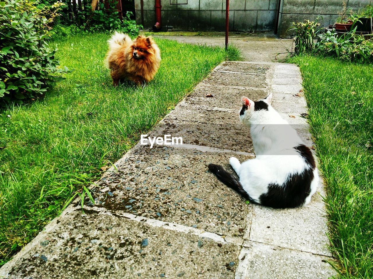 domestic animals, animal themes, mammal, pets, domestic cat, grass, high angle view, cat, one animal, feline, day, no people, outdoors, nature
