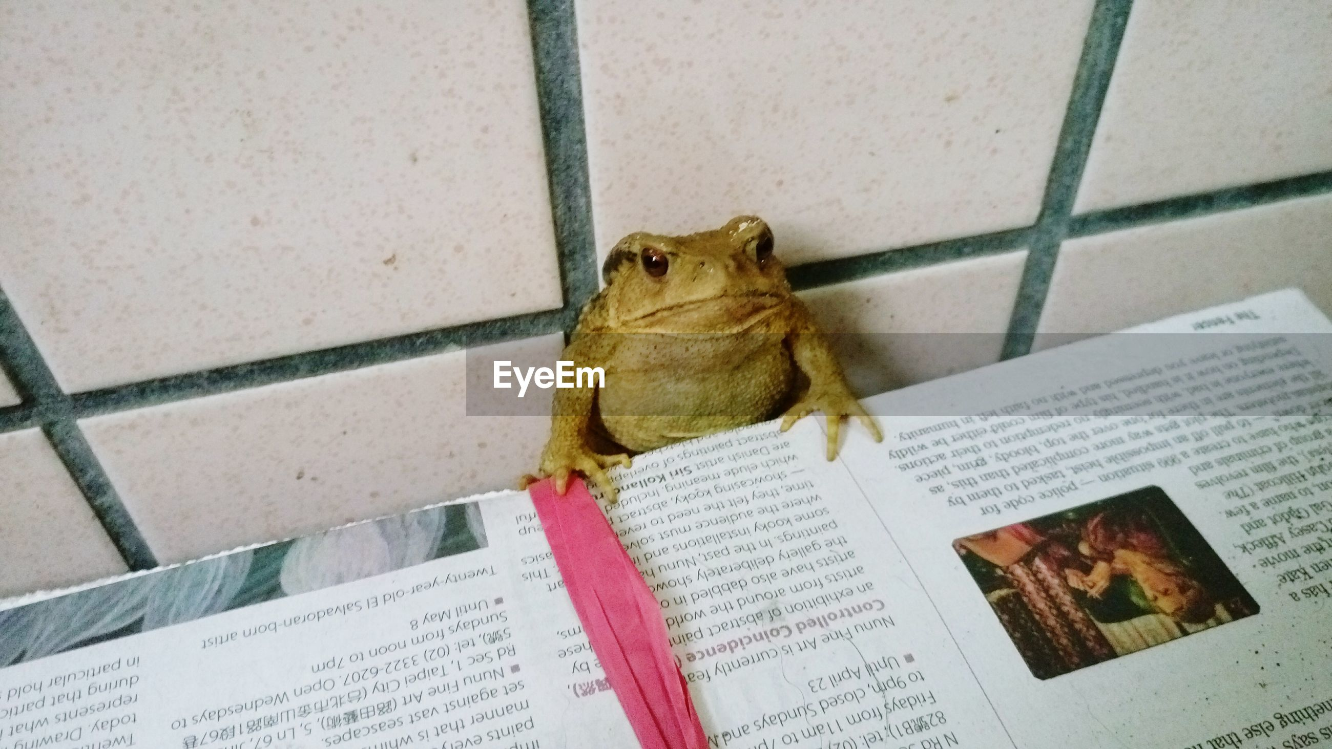 Low angle portrait of a frog