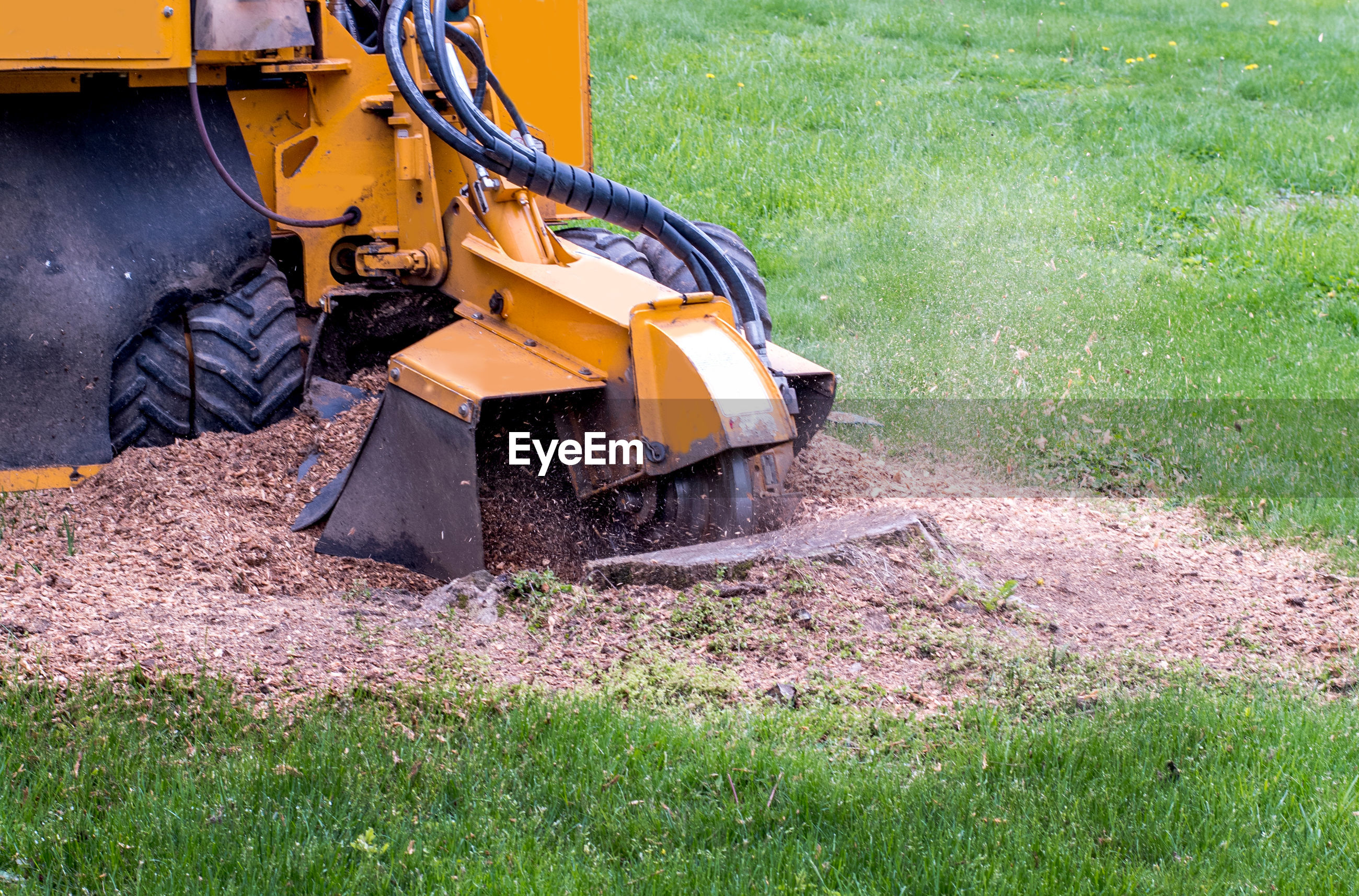 Close up of a stump grinder machine, grinding up a tree stump into saw dust and mulch