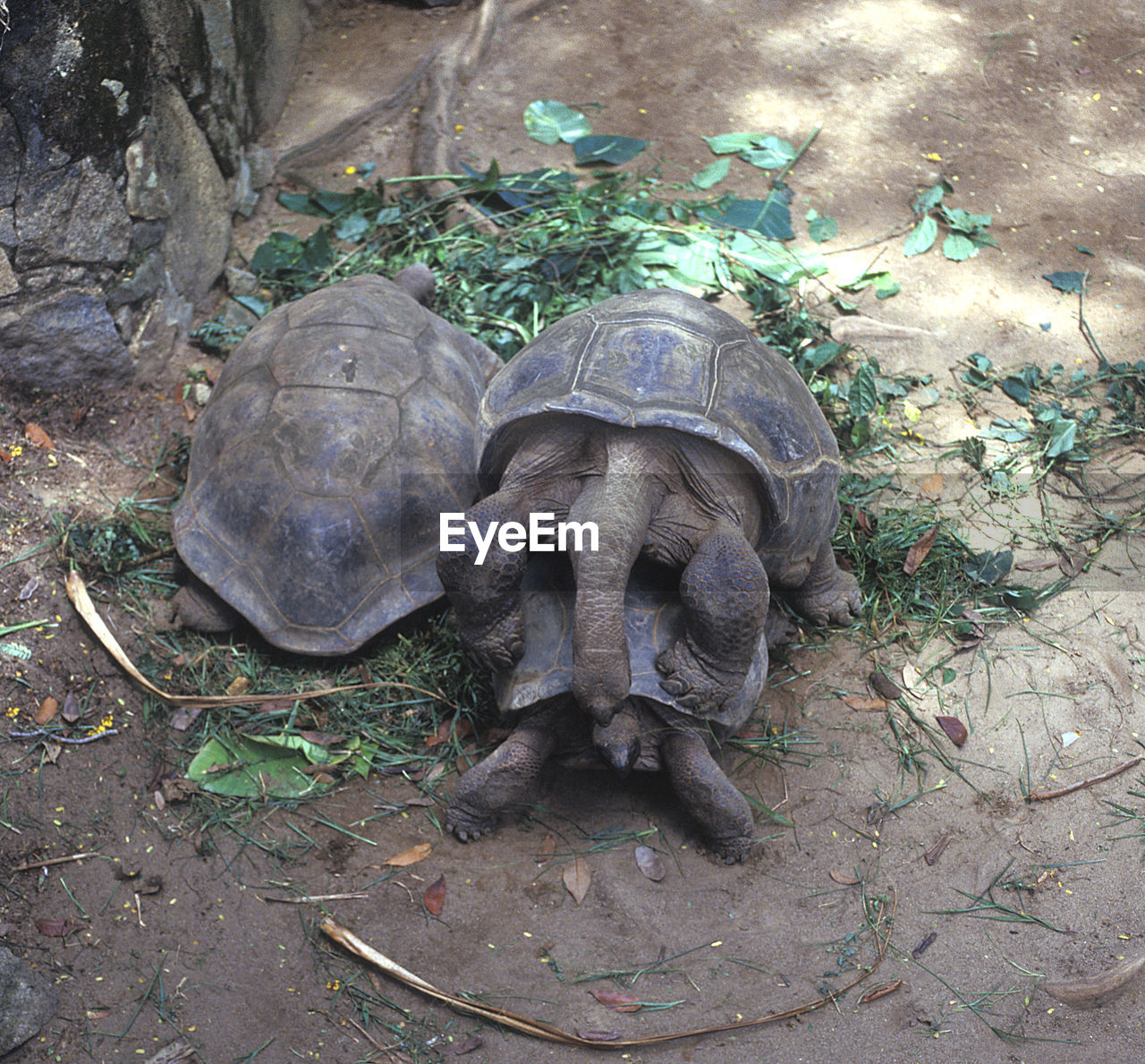 high angle view, day, animals in the wild, animal themes, no people, field, outdoors, tortoise, growth, nature, tortoise shell, close-up