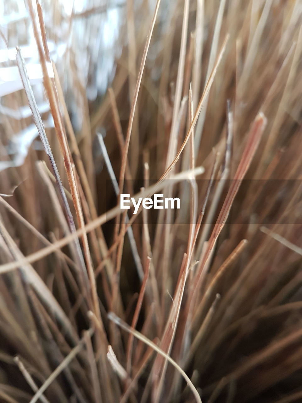 growth, nature, plant, close-up, no people, straw, day, outdoors, beauty in nature, grass