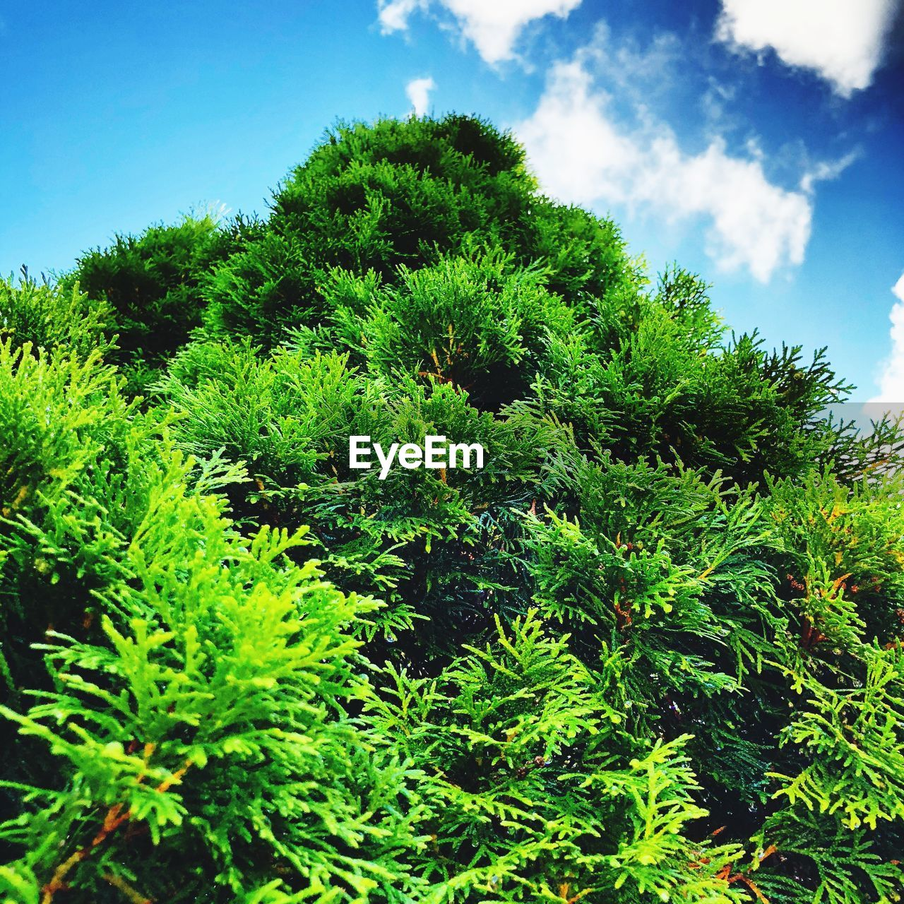 plant, growth, tree, green color, sky, beauty in nature, nature, day, tranquility, no people, cloud - sky, low angle view, outdoors, tranquil scene, foliage, blue, leaf, plant part, lush foliage, scenics - nature