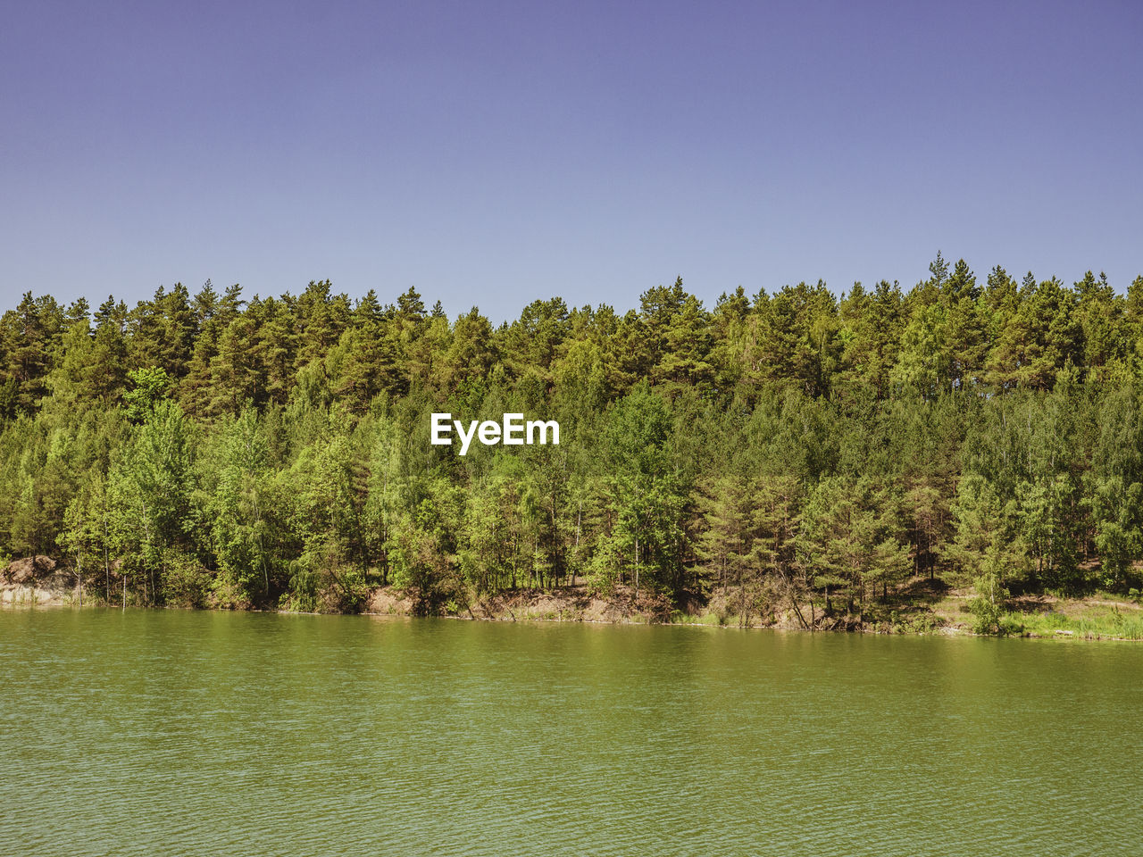 tree, plant, water, beauty in nature, tranquility, tranquil scene, waterfront, scenics - nature, growth, green color, lake, sky, non-urban scene, no people, day, nature, clear sky, land, forest, outdoors