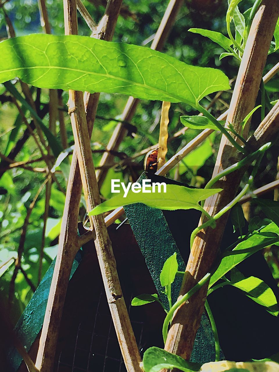 leaf, growth, green color, plant, day, nature, outdoors, no people, focus on foreground, close-up, animals in the wild, agriculture, banana tree, beauty in nature, animal themes, freshness
