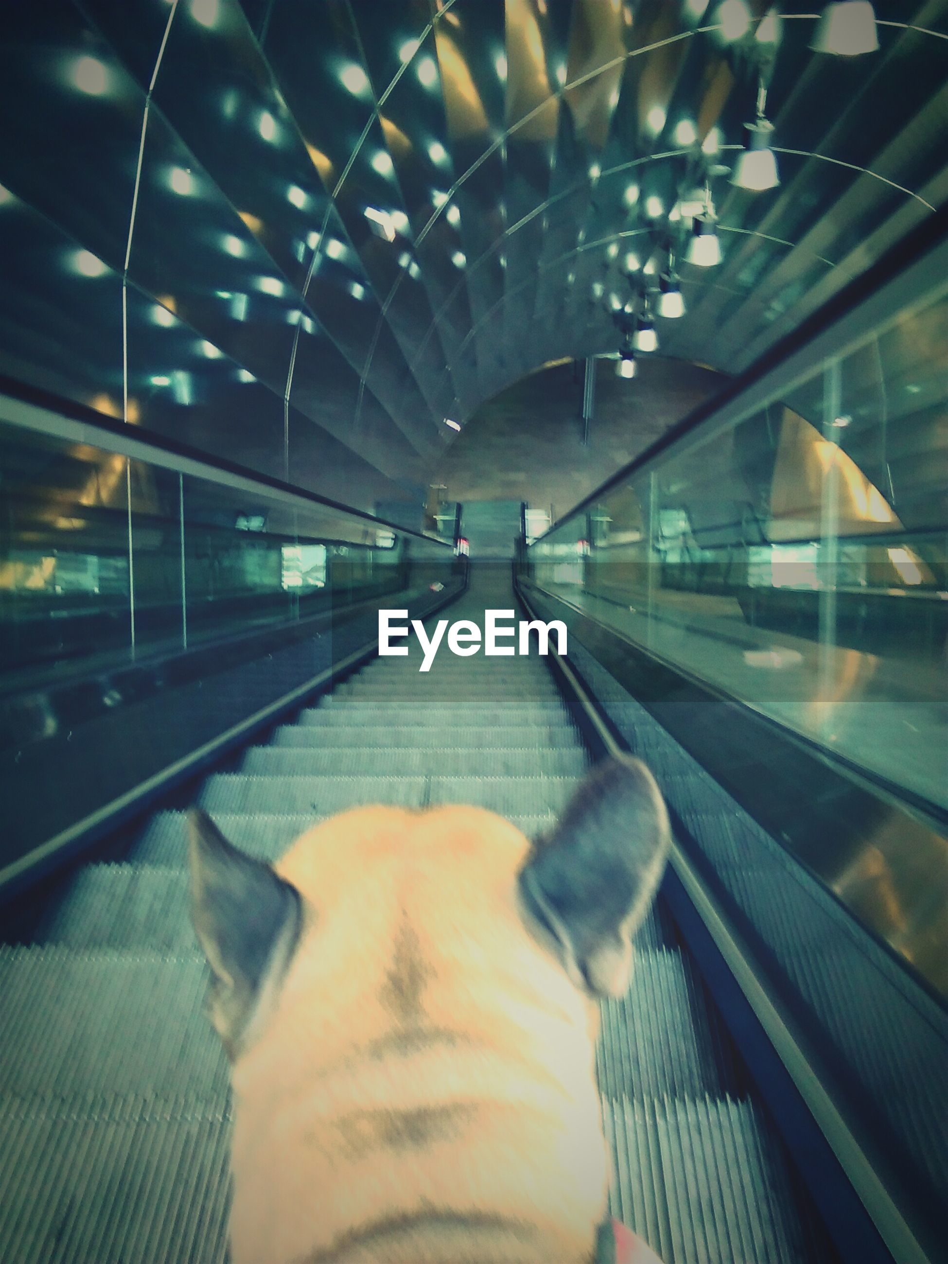 Close-up rear view of dog on escalator