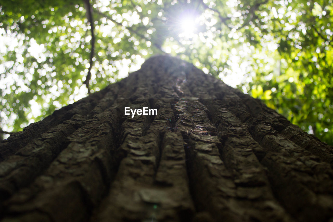 tree, plant, forest, nature, tree trunk, trunk, day, no people, land, sunlight, low angle view, growth, selective focus, outdoors, focus on foreground, textured, close-up, wood - material, pattern, wood, lens flare, bark, surface level, directly below