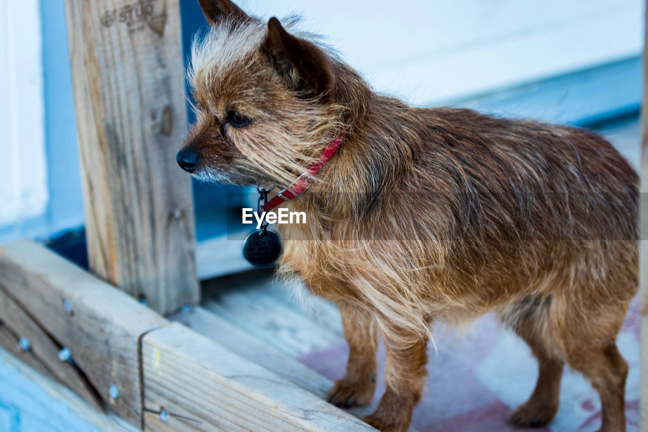 pets, one animal, domestic animals, dog, animal themes, mammal, focus on foreground, day, no people, indoors, close-up