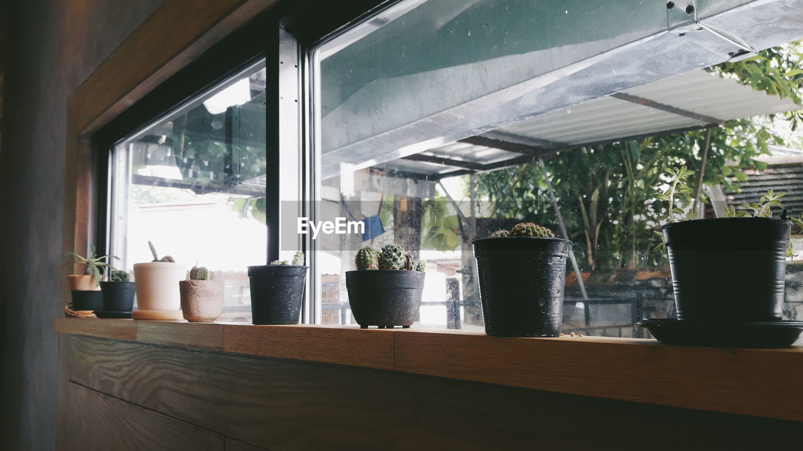 View of plants on window sill