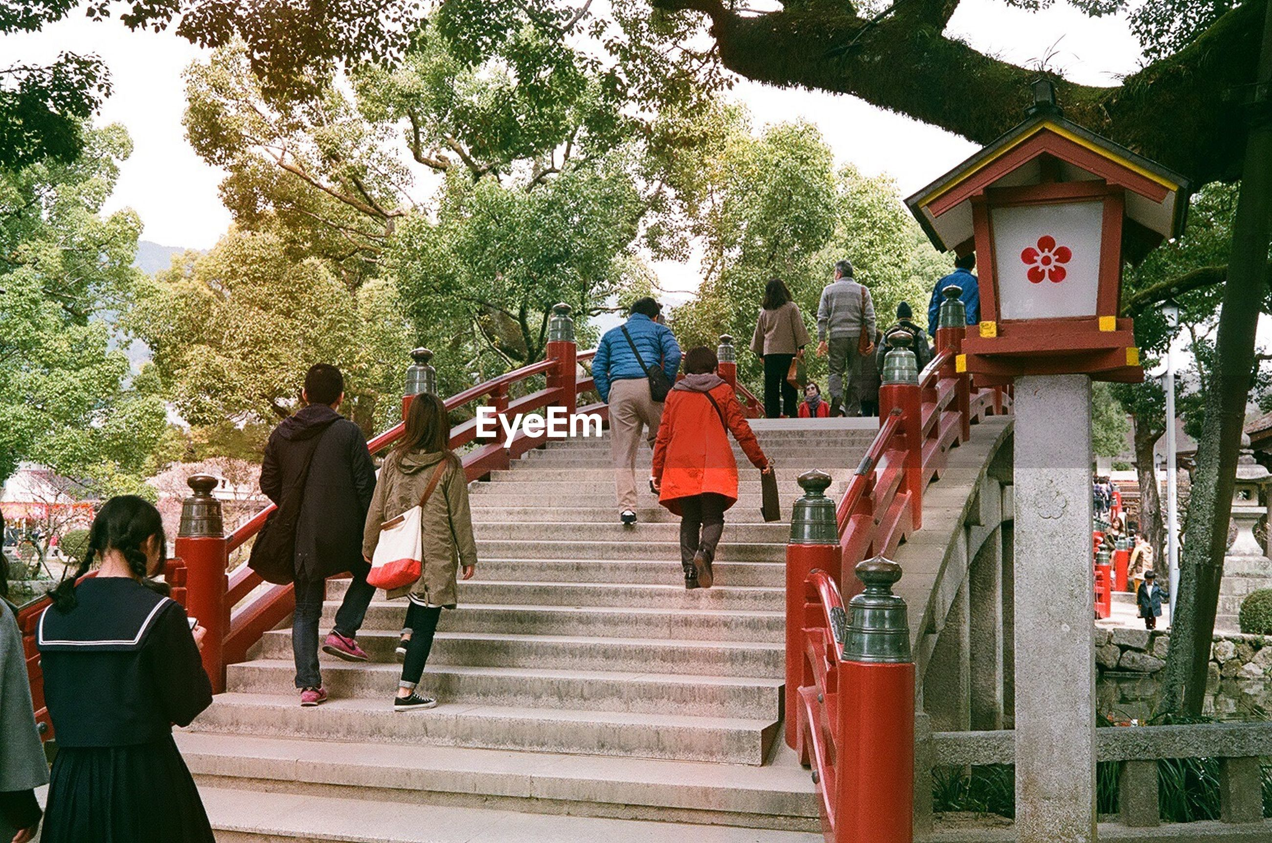 tree, real people, women, outdoors, large group of people, steps, celebration, men, day, steps and staircases, people, adults only, adult