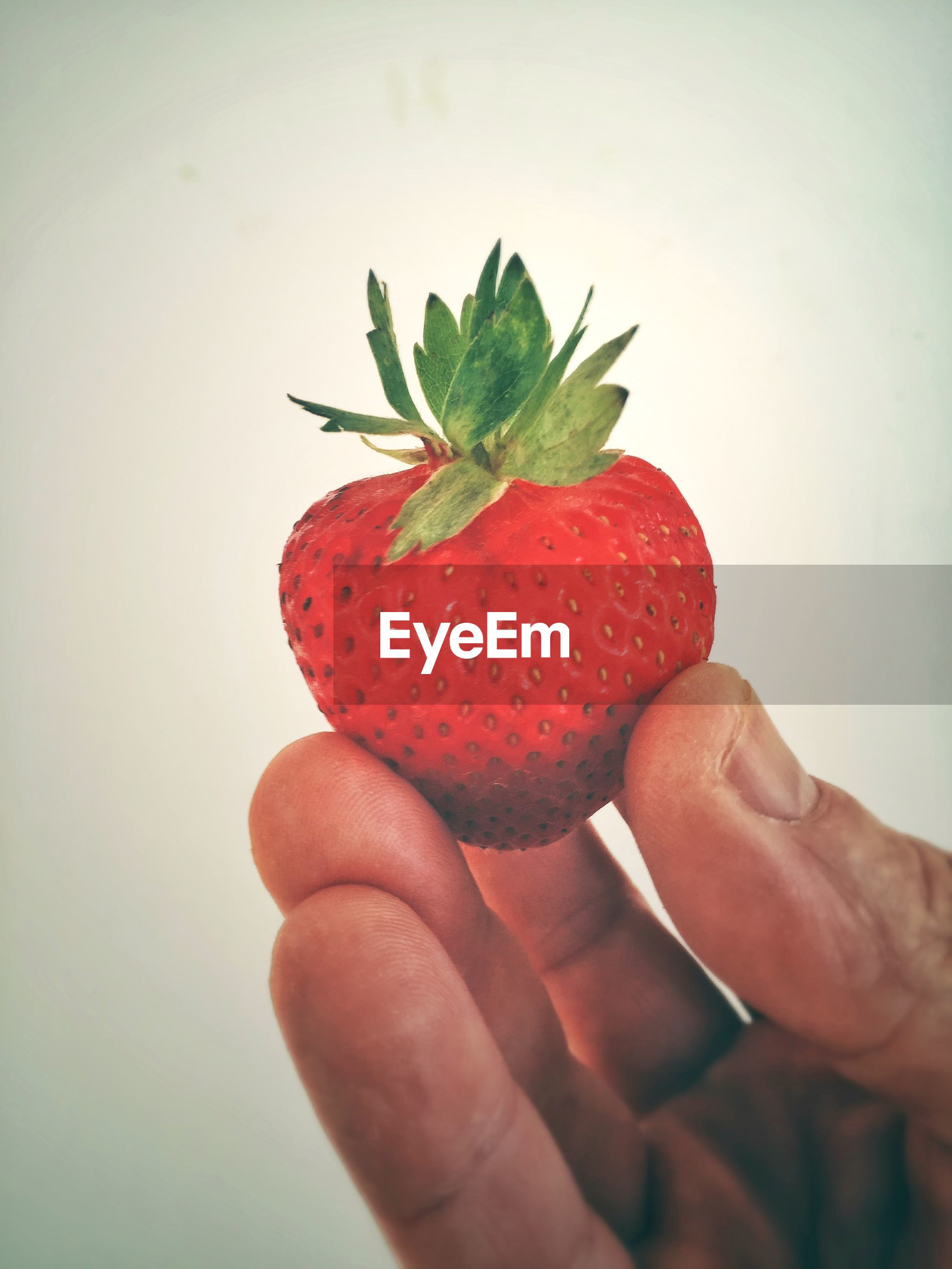 CLOSE-UP OF HAND HOLDING STRAWBERRY WITH STRAWBERRIES