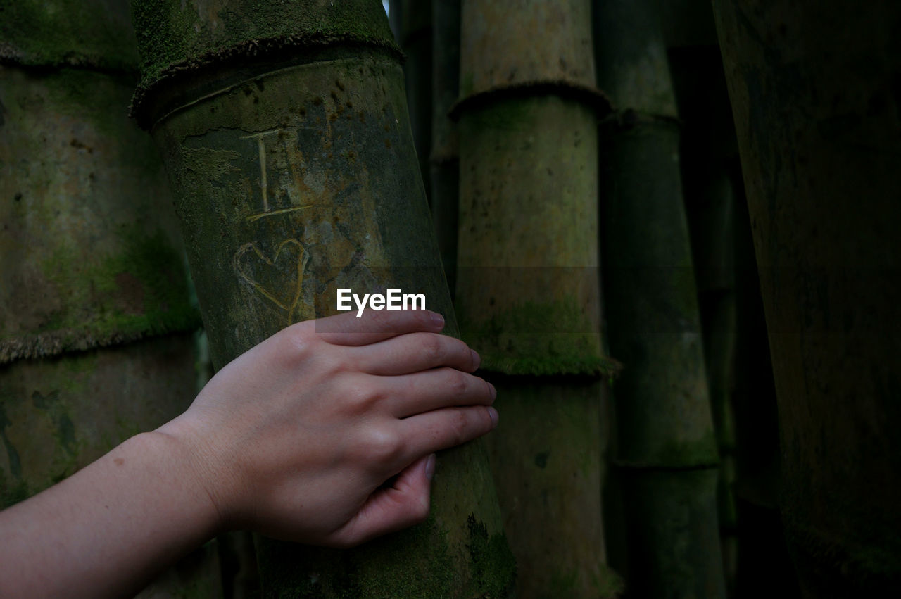 Cropped Hand Of Woman Touching Bamboo Plant