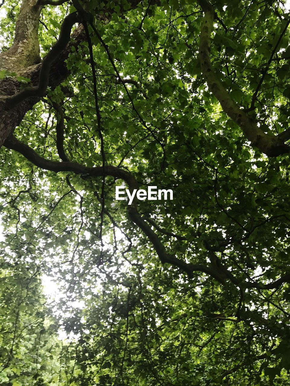 tree, growth, nature, branch, low angle view, green color, day, beauty in nature, outdoors, no people, forest, tranquility, backgrounds