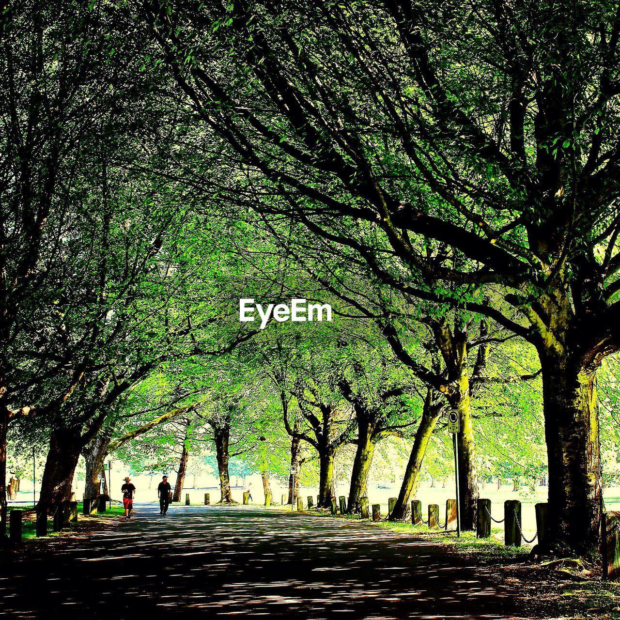 Men walking on road along trees