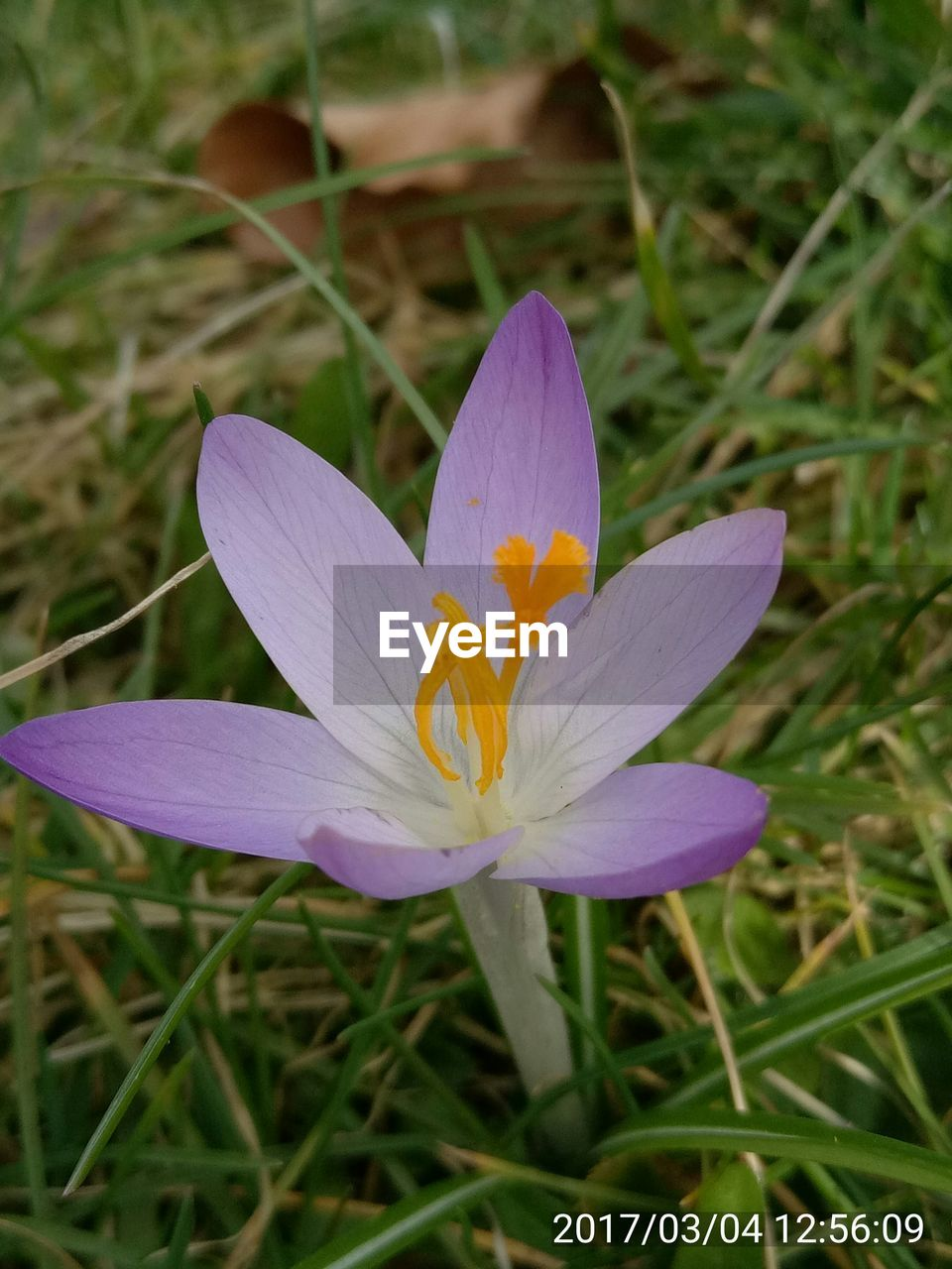 flower, petal, growth, fragility, flower head, freshness, beauty in nature, nature, close-up, day, plant, no people, blooming, outdoors, crocus