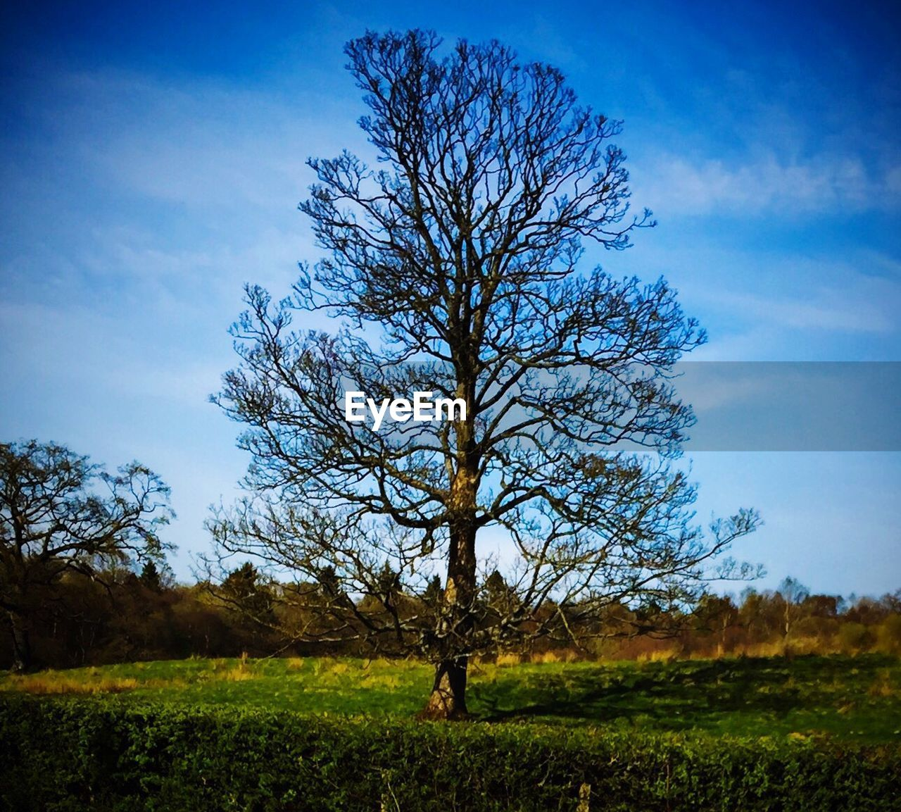 tree, landscape, solitude, lone, tranquility, field, sky, nature, bare tree, beauty in nature, blue, branch, outdoors, day, one person, people