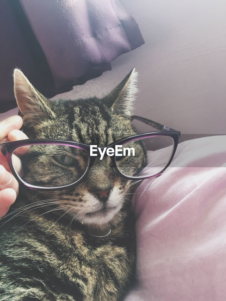 pets, domestic animals, domestic, mammal, cat, one animal, domestic cat, feline, vertebrate, human hand, human body part, real people, one person, hand, indoors, unrecognizable person, furniture, pet owner, whisker, finger