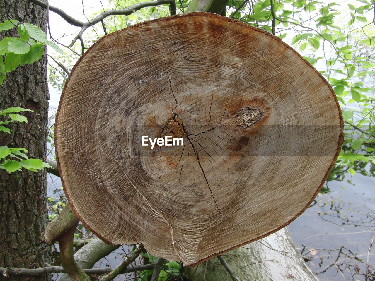 tree, wood - material, tree stump, tree ring, tree trunk, nature, circle, outdoors, day, deforestation, growth, plant, no people, log, lumber industry, close-up