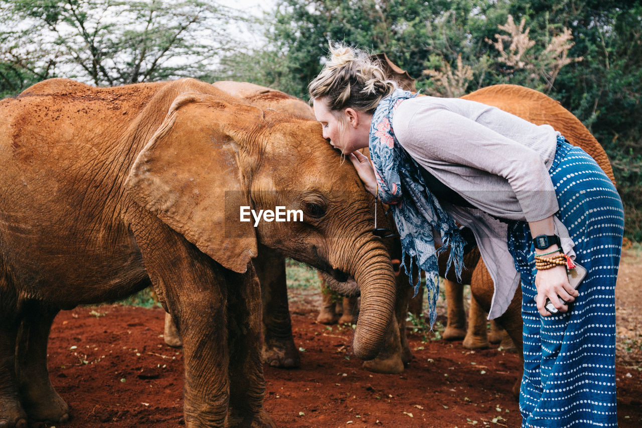 Side View Of Woman Kissing Baby Elephant