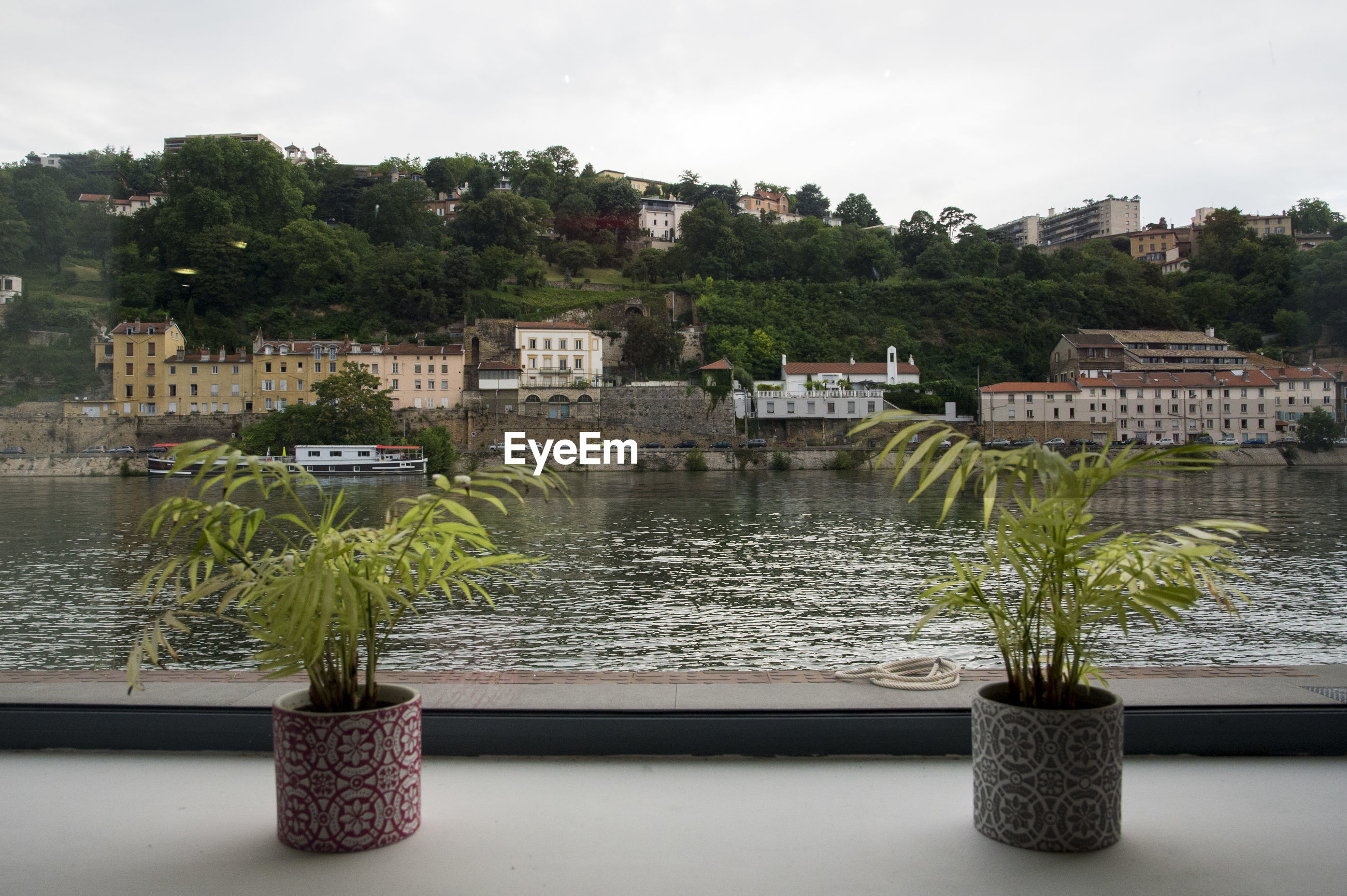 PLANTS BY RIVER AGAINST BUILDING IN CITY