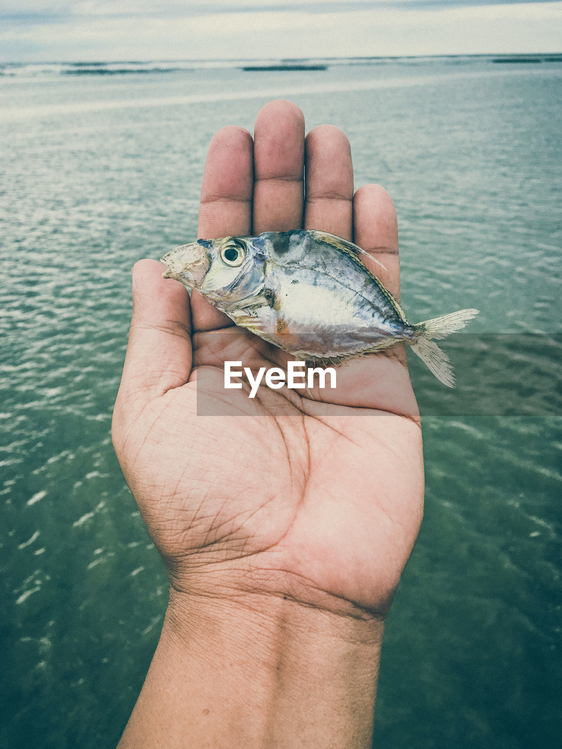 Close-up of hand holding fish in lake
