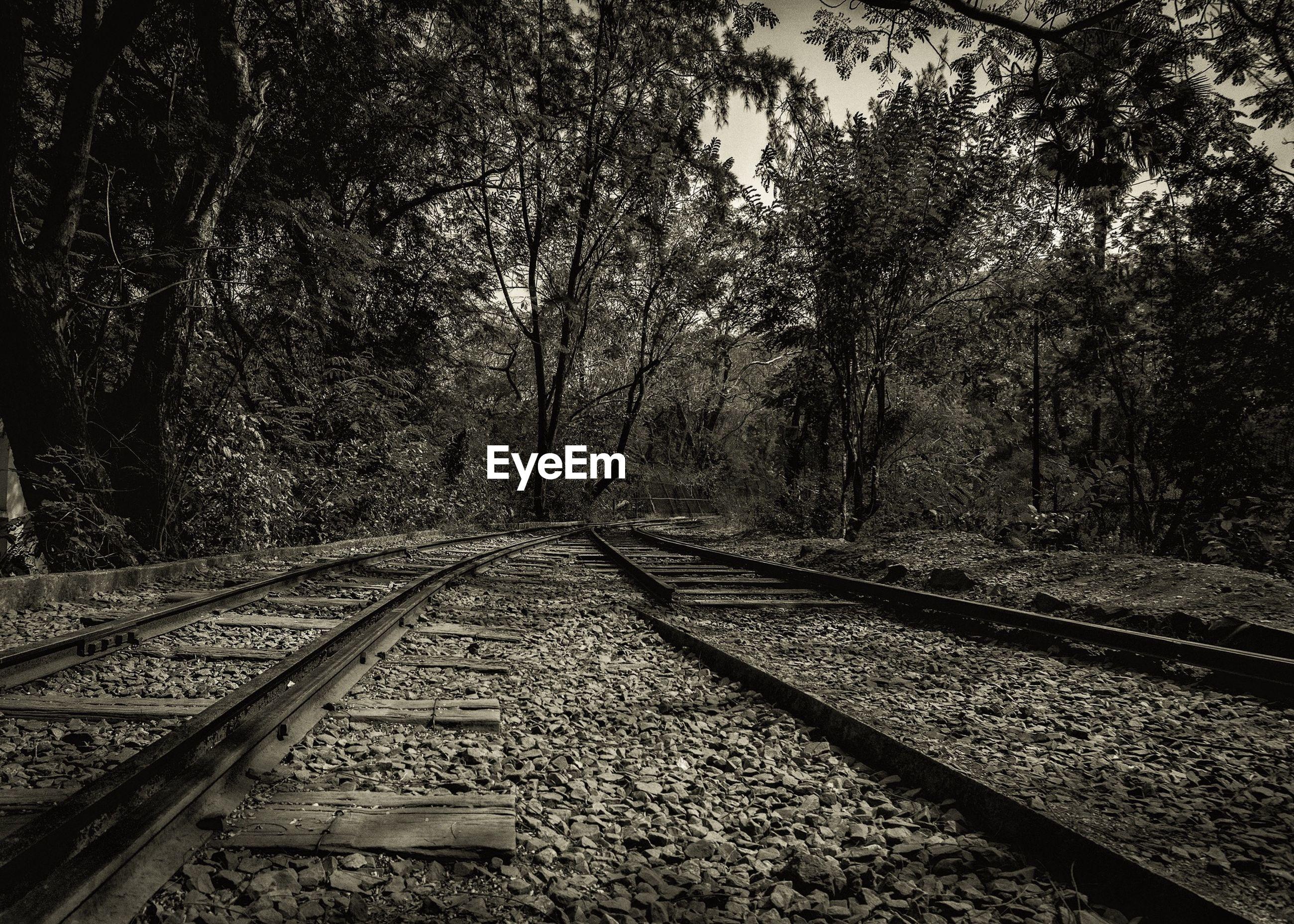 Abandoned railroad tracks at sanjay gandhi national park