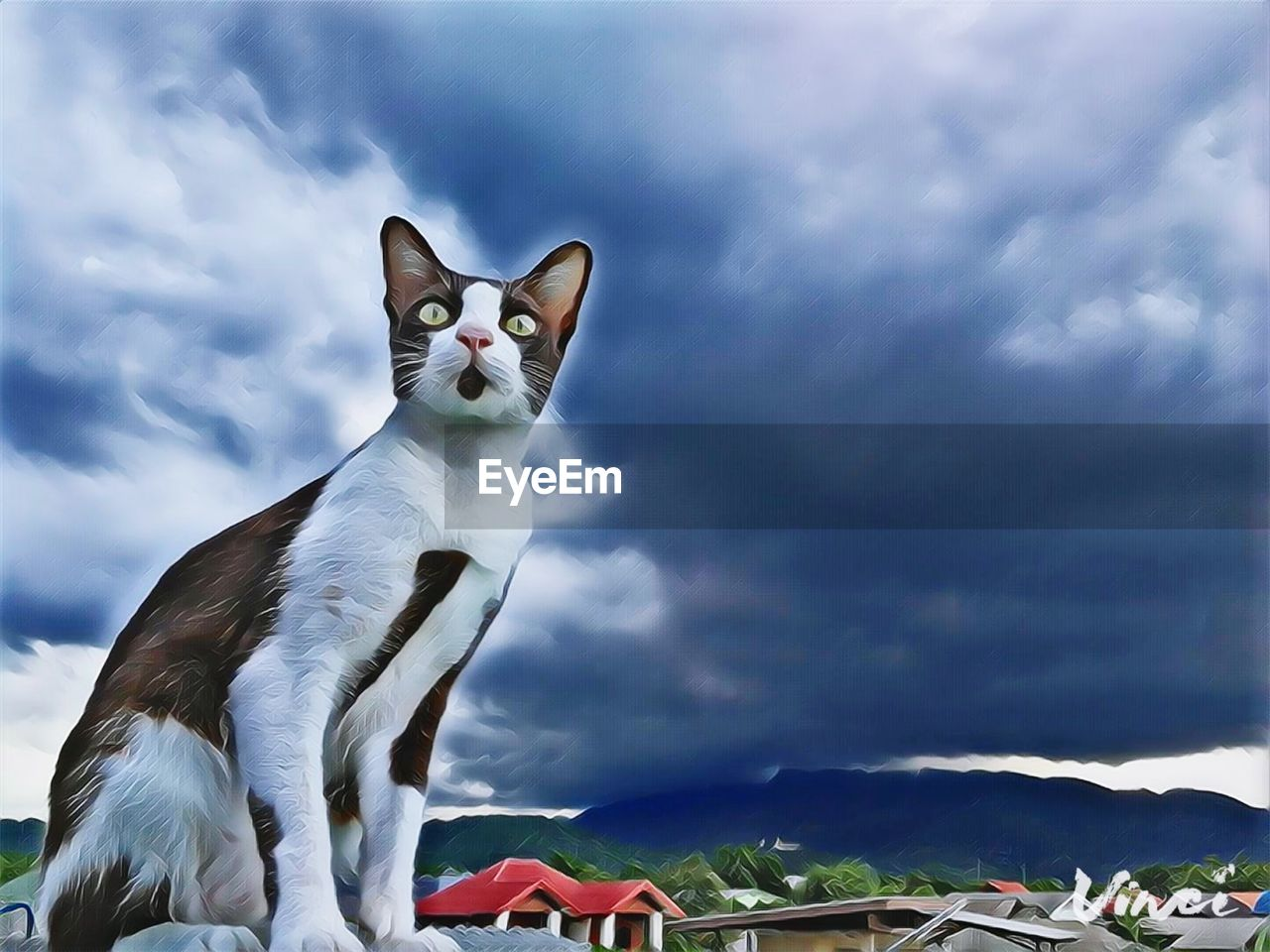 cloud - sky, animal themes, animal, one animal, sky, cat, feline, vertebrate, mammal, domestic animals, pets, domestic cat, domestic, no people, nature, day, mountain, white color, looking at camera, portrait, whisker, mouth open