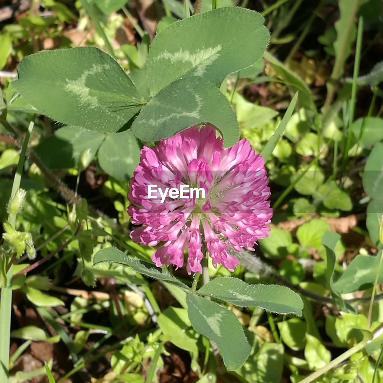 leaf, growth, nature, plant, flower, fragility, green color, beauty in nature, day, freshness, petal, sunlight, outdoors, purple, no people, pink color, flower head, close-up, blooming, water, periwinkle