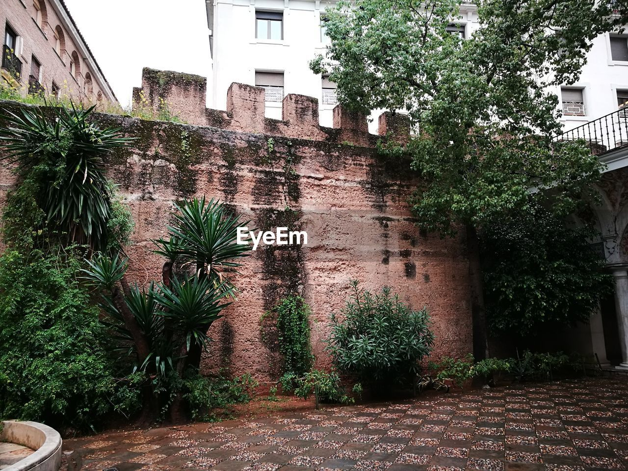 architecture, built structure, building exterior, plant, tree, growth, nature, building, tropical climate, day, no people, palm tree, outdoors, wall, residential district, city, potted plant, wall - building feature, green color, sky, courtyard