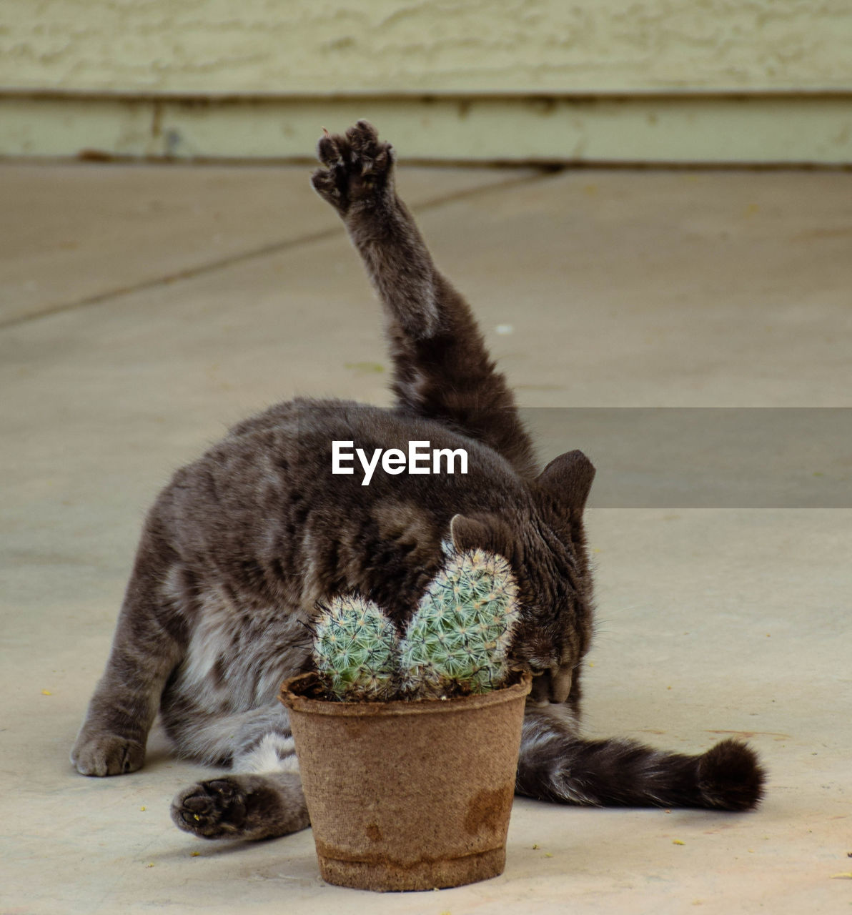 Close-up of cat sitting by potted cactus plant