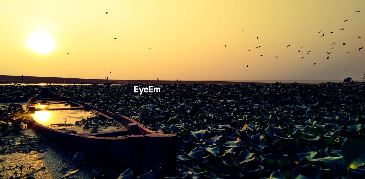 sky, sunset, nature, water, large group of animals, bird, beauty in nature, animals in the wild, vertebrate, scenics - nature, no people, animal, group of animals, flying, transportation, animal wildlife, tranquility, animal themes, mode of transportation, outdoors, flock of birds