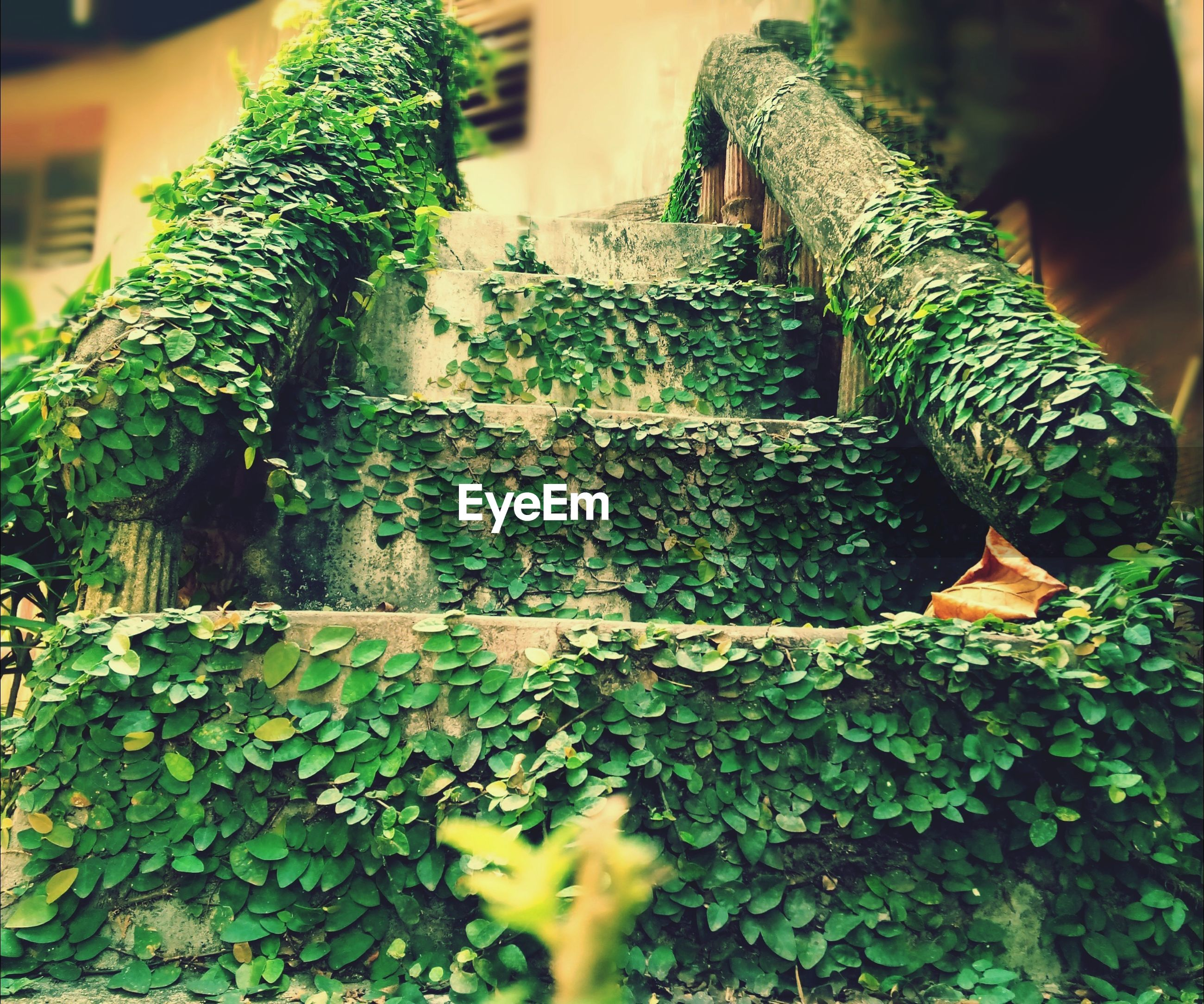 green color, plant, growth, moss, built structure, ivy, tree, architecture, building exterior, outdoors, leaf, day, close-up, nature, focus on foreground, selective focus, pattern, wall - building feature