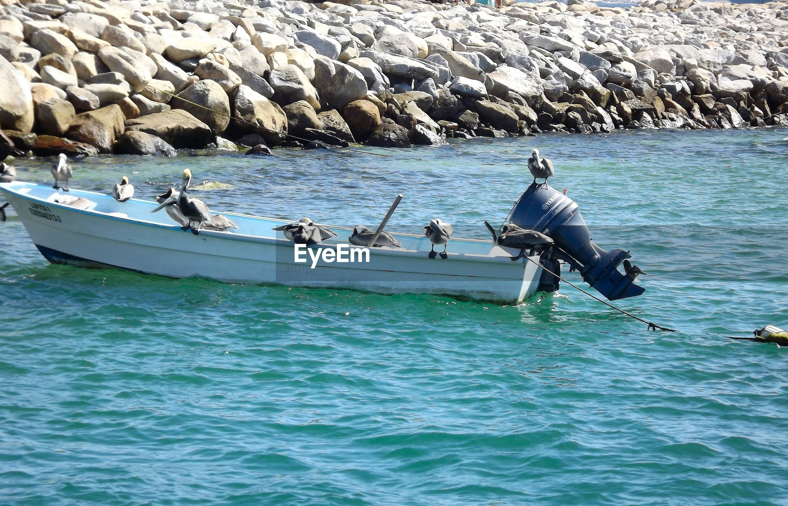 Pelicans perching on boat in sea