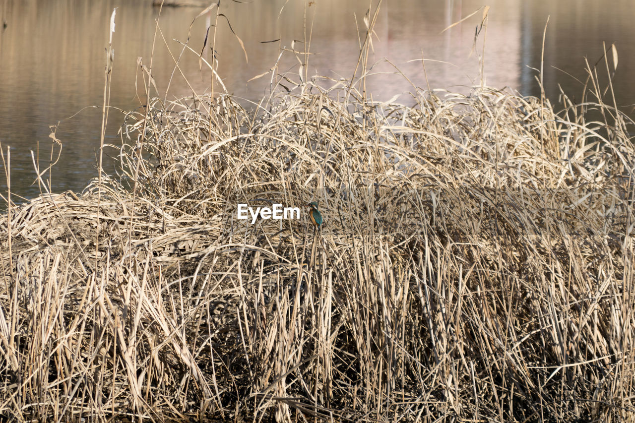 agriculture, farm, hay, straw, rural scene, nature, no people, field, outdoors, tranquility, cereal plant, day, grass, wheat, beauty in nature, close-up, hay bale