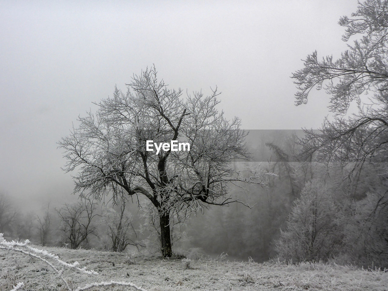 tree, plant, fog, beauty in nature, bare tree, tranquility, tranquil scene, cold temperature, environment, winter, land, scenics - nature, landscape, no people, nature, non-urban scene, sky, snow, field, outdoors, isolated, hazy