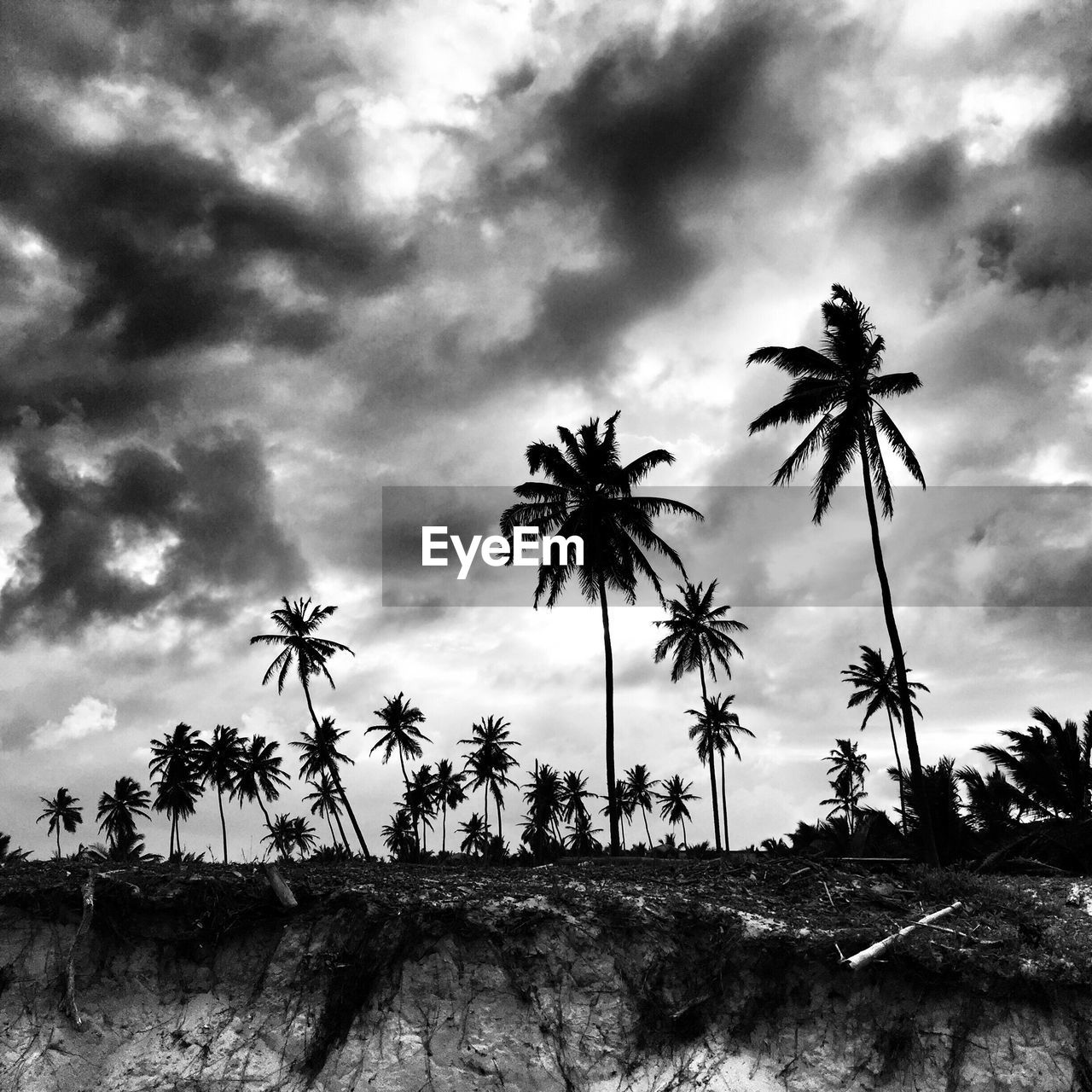 palm tree, cloud - sky, sky, tree, nature, growth, day, no people, low angle view, beauty in nature, tranquility, outdoors, storm cloud, fragility