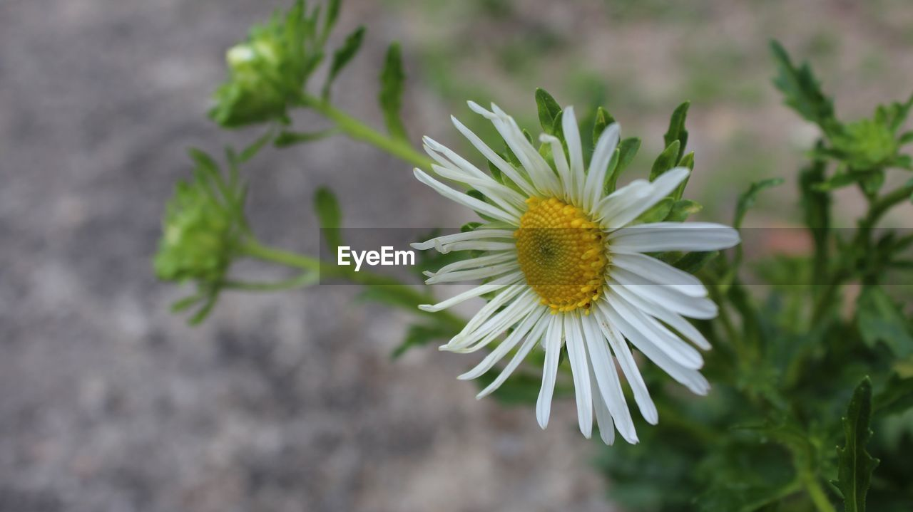 flower, growth, nature, plant, fragility, freshness, no people, blooming, beauty in nature, outdoors, close-up, flower head, day