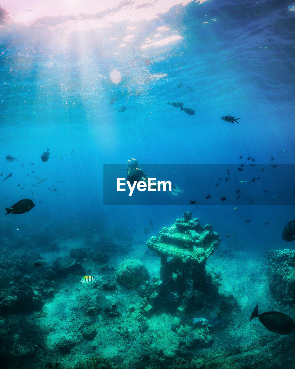 underwater, water, sea, swimming, undersea, animal, animal wildlife, animal themes, group of animals, animals in the wild, sea life, fish, vertebrate, large group of animals, nature, blue, real people, exploration, adventure, marine, outdoors, school of fish, underwater diving, turquoise colored