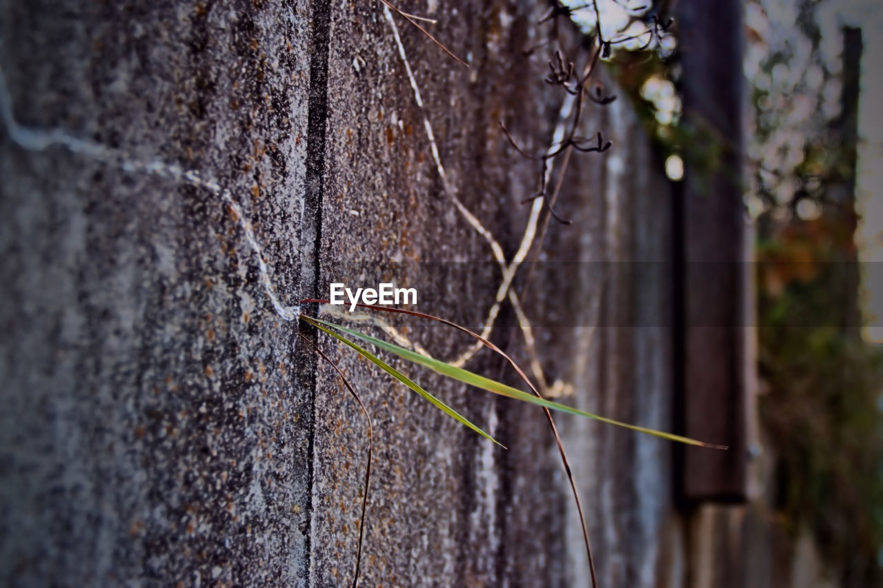 day, tree trunk, no people, outdoors, nature, close-up, one animal, plant, leaf, growth, tree, animal themes