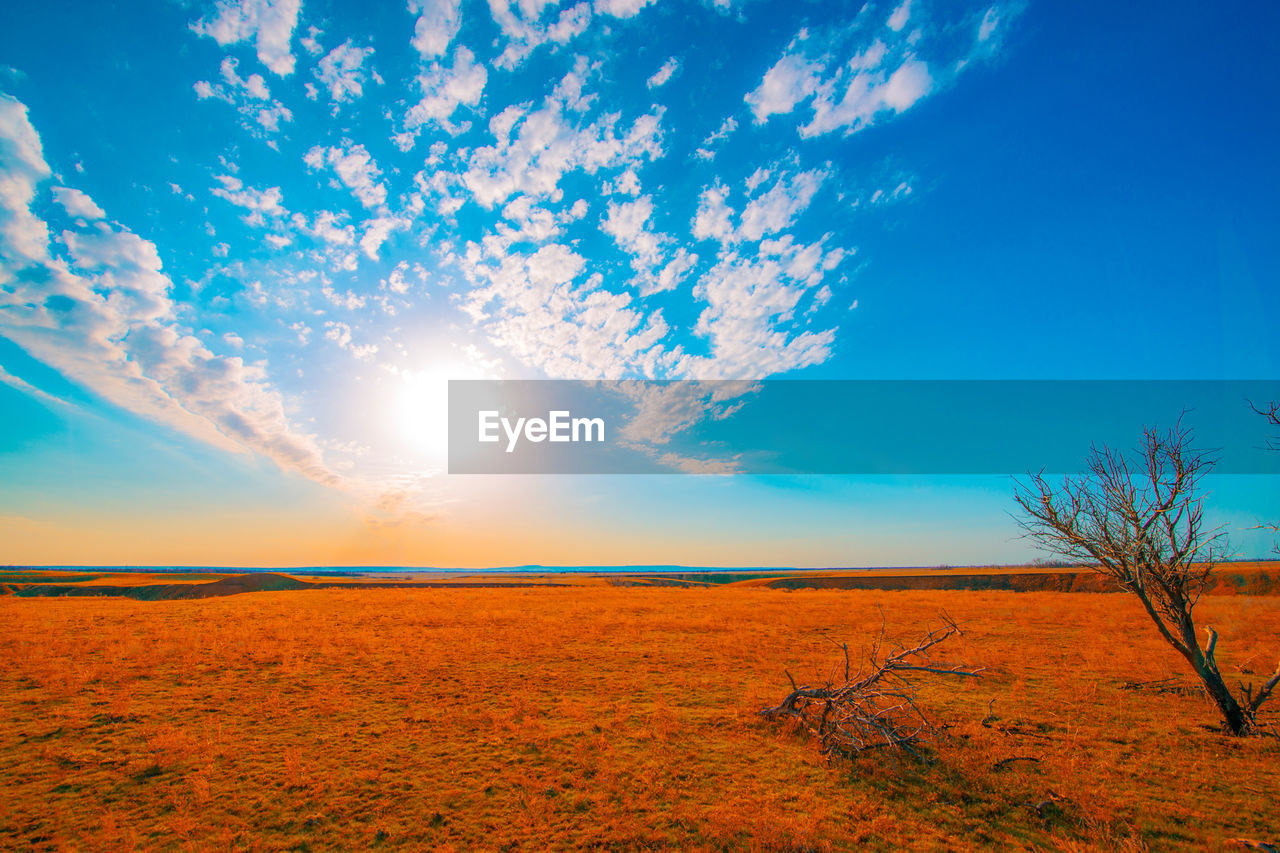 nature, tranquility, landscape, tranquil scene, beauty in nature, field, scenics, sky, sunlight, sun, outdoors, no people, blue, agriculture, growth, day, tree, sunset