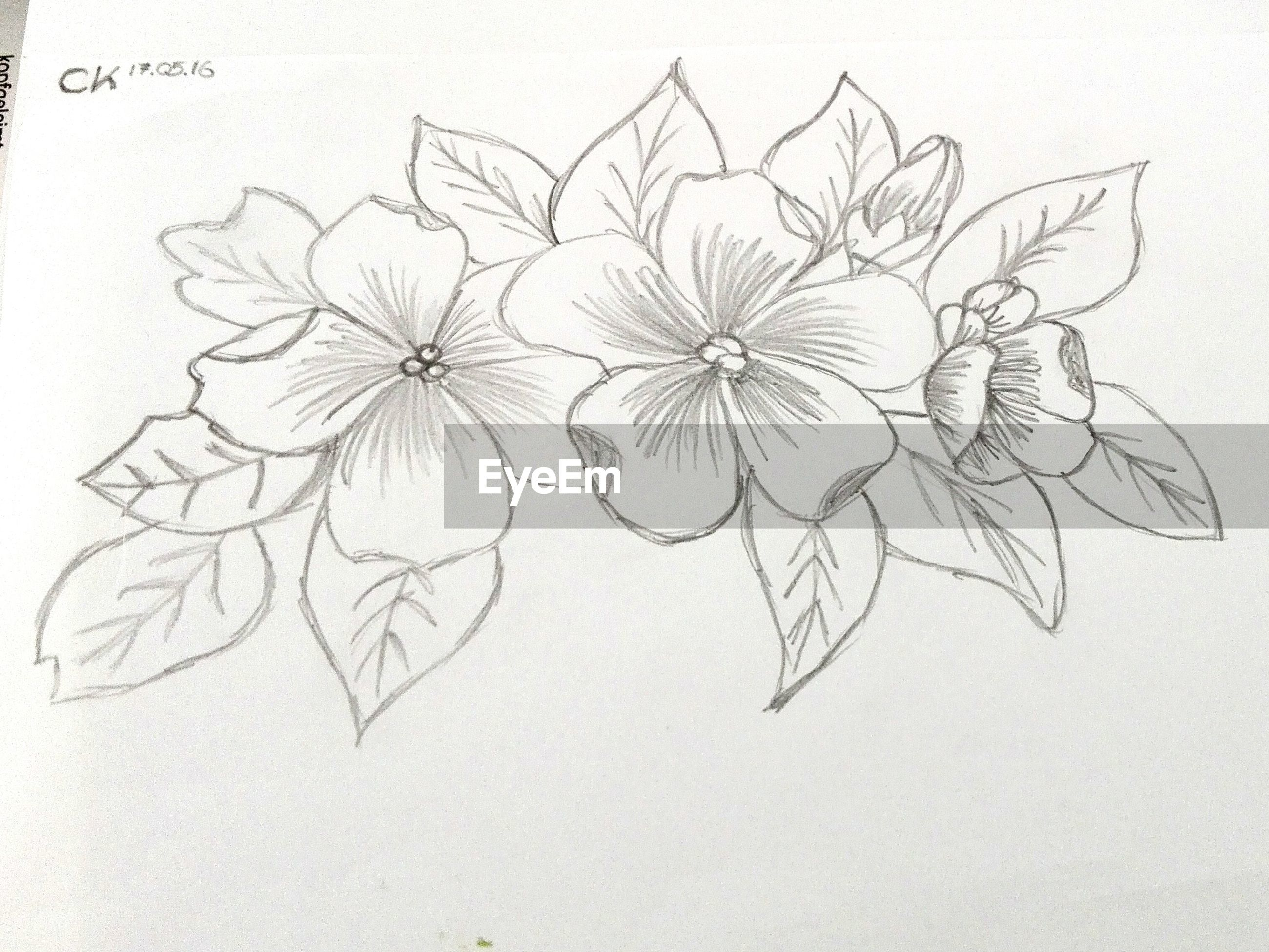 creativity, art, art and craft, indoors, wall - building feature, close-up, paper, studio shot, design, text, ideas, floral pattern, wall, full frame, no people, white background, western script, still life, decoration, backgrounds