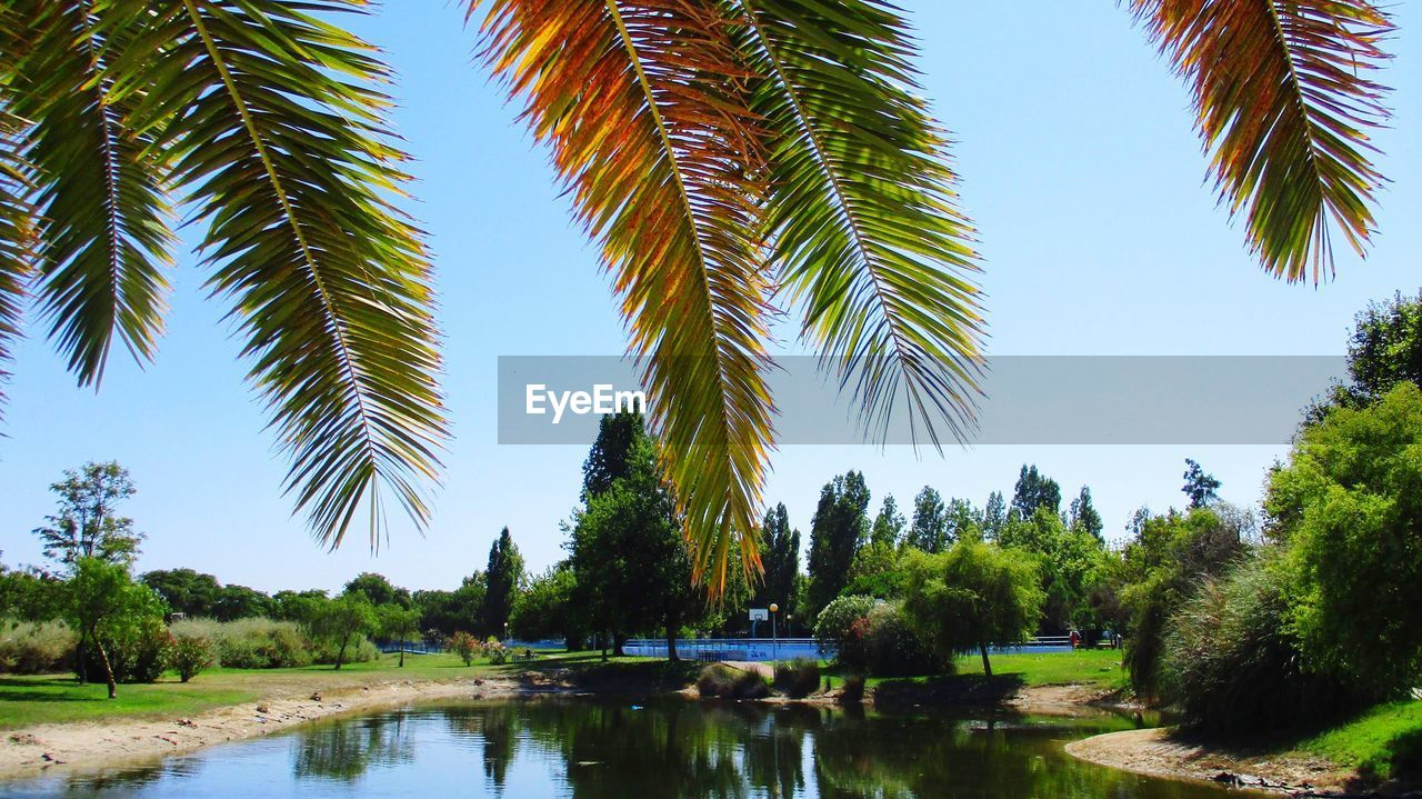 tree, water, plant, growth, palm tree, beauty in nature, reflection, nature, tranquility, tropical climate, sky, day, green color, lake, scenics - nature, no people, tranquil scene, waterfront, outdoors