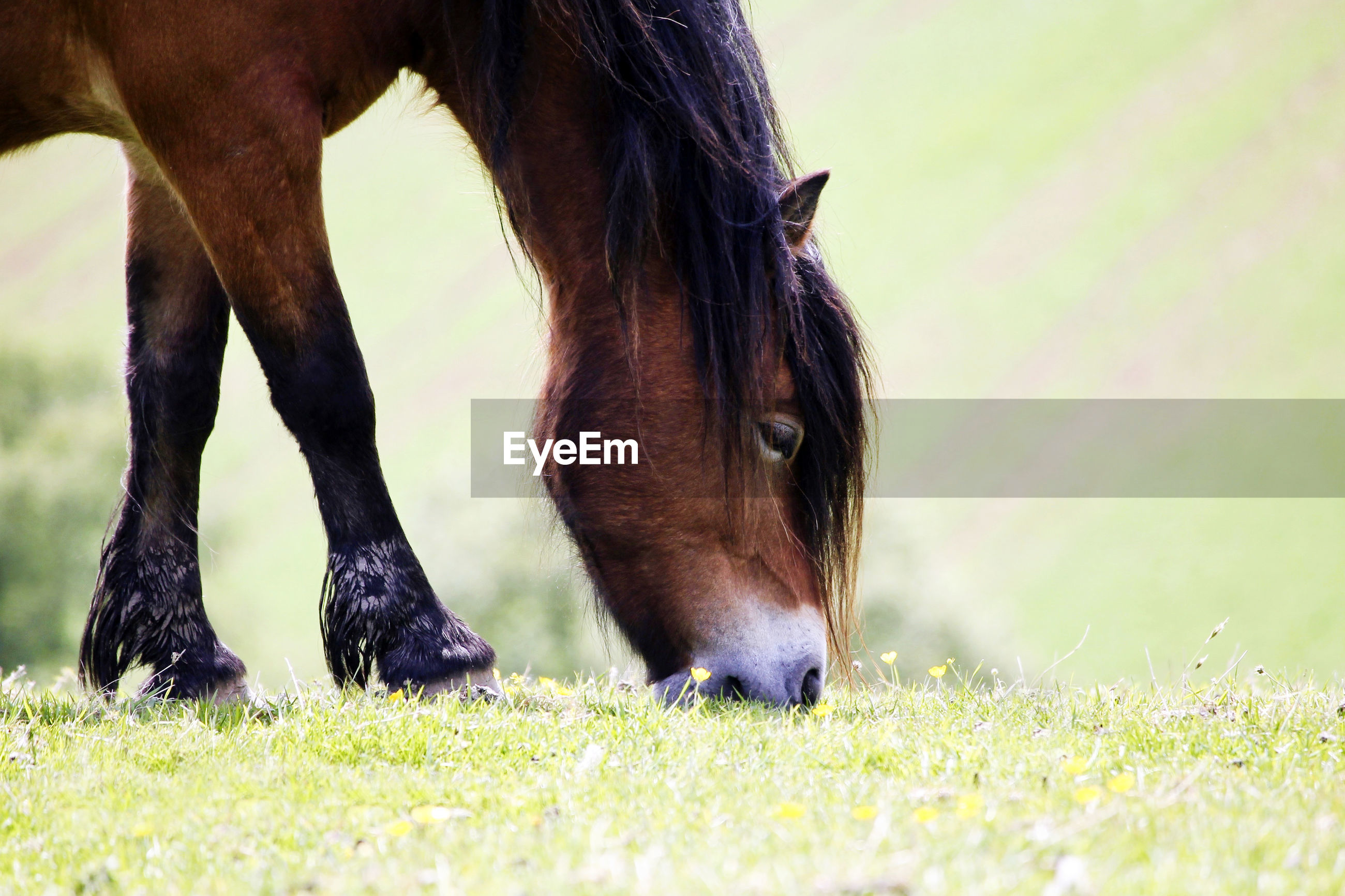 VIEW OF A HORSE IN FIELD