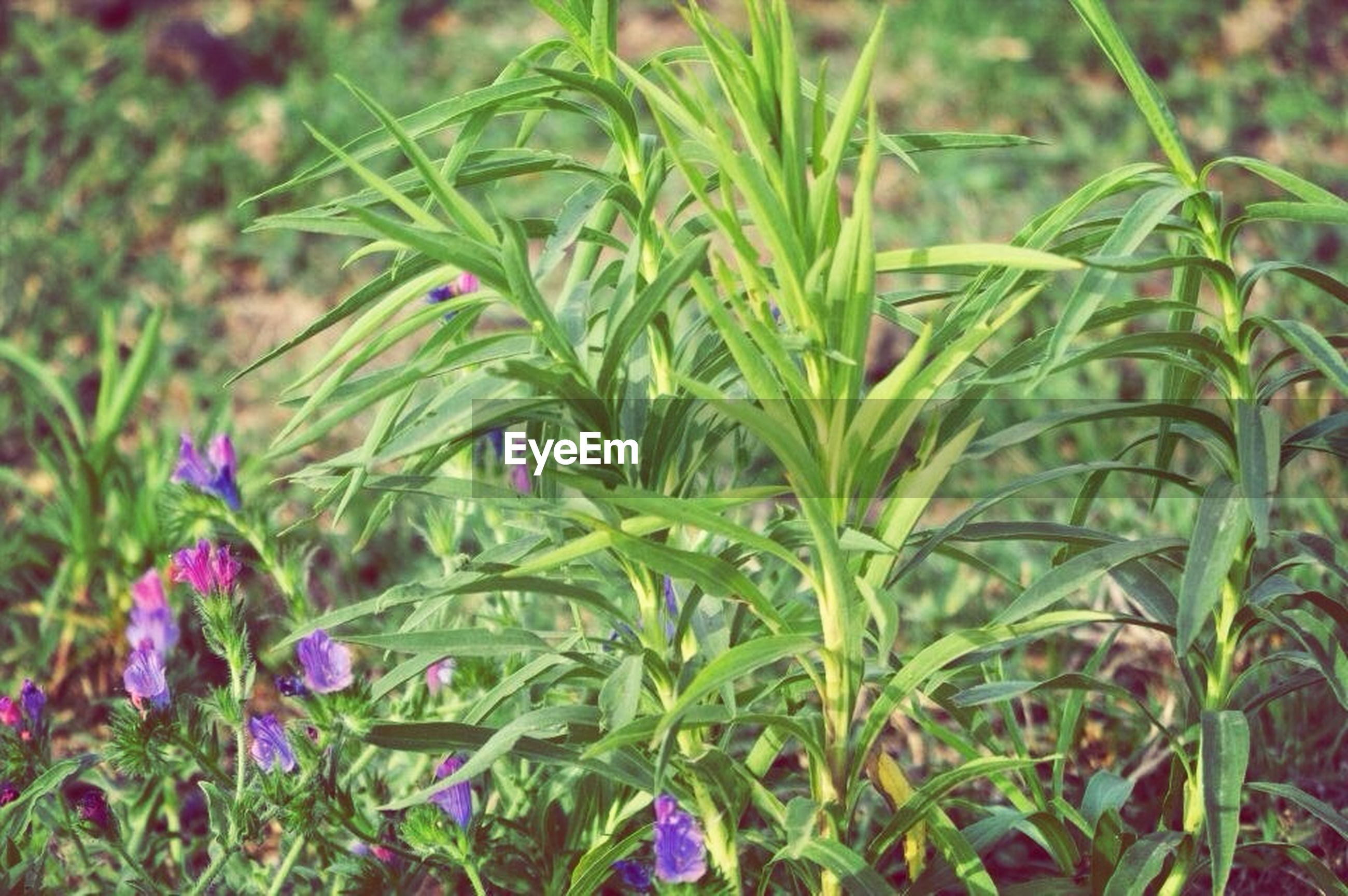 growth, freshness, plant, green color, flower, beauty in nature, nature, fragility, leaf, close-up, field, focus on foreground, growing, grass, day, outdoors, blooming, selective focus, green, no people